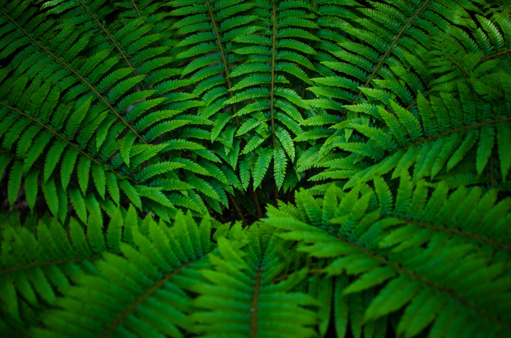 Photo of green fern