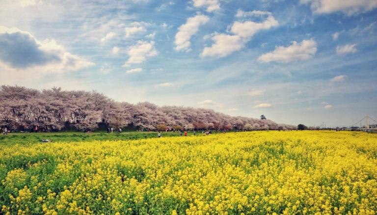 Photo of Satte Japan