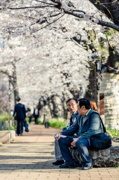 Photo of people sitting beneath sakura