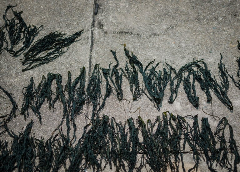 Drying Seaweed