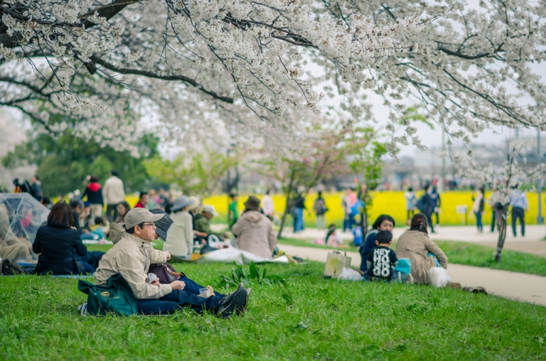 People sitting beneath cherry blossoms