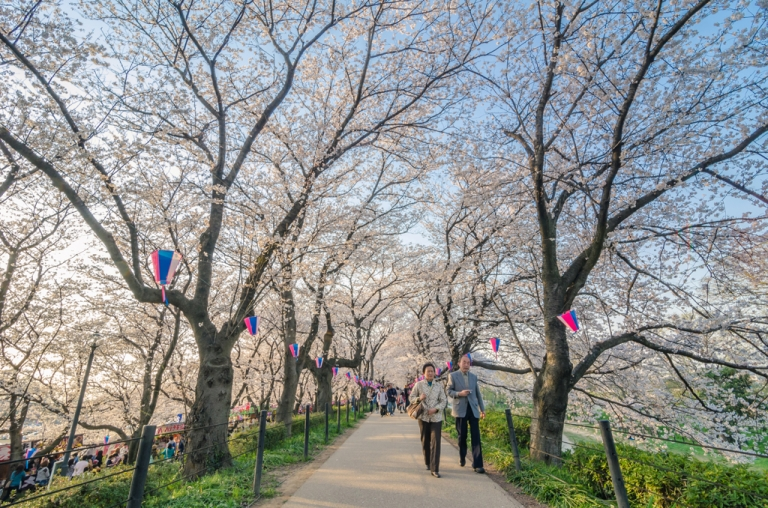 Photo of people walking beneath cherry blossoms