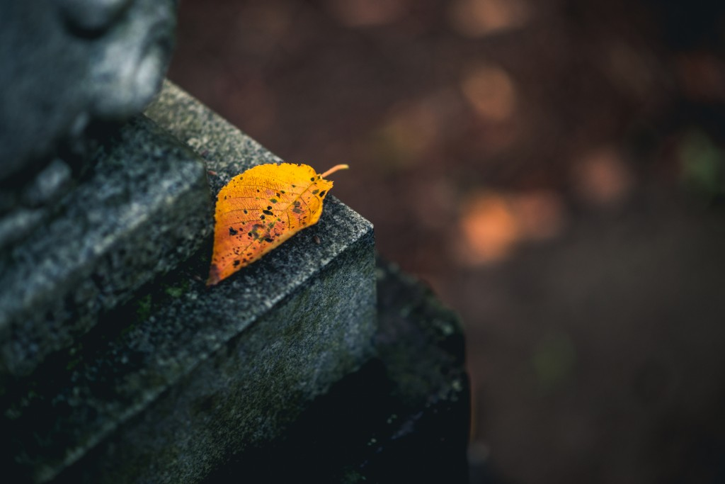 Single autumn leaf