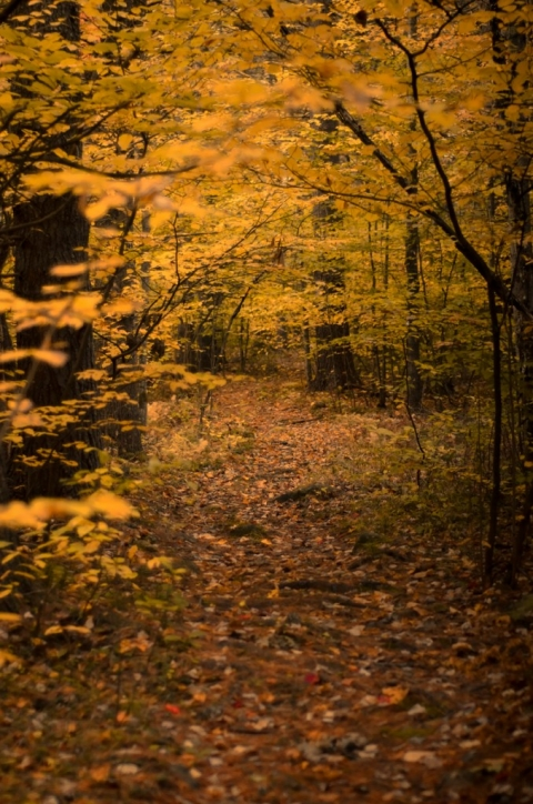 photo of autumn woods