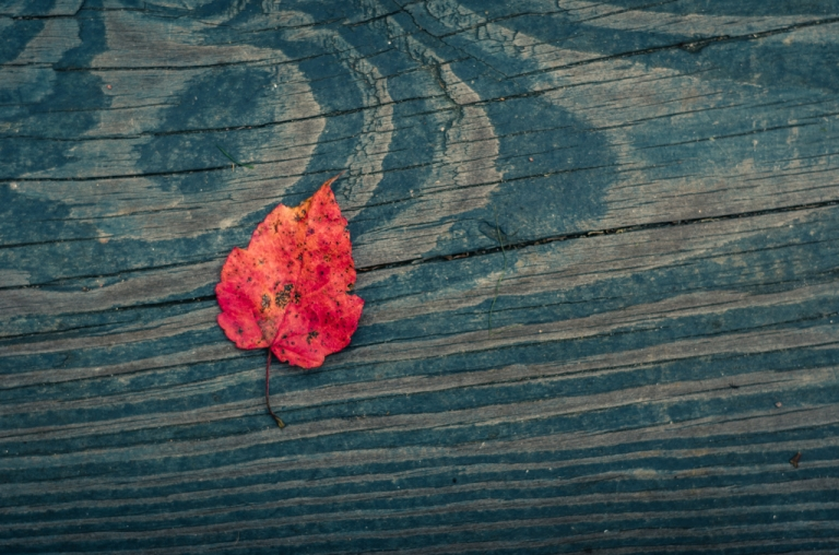 read autumn leaf on wood