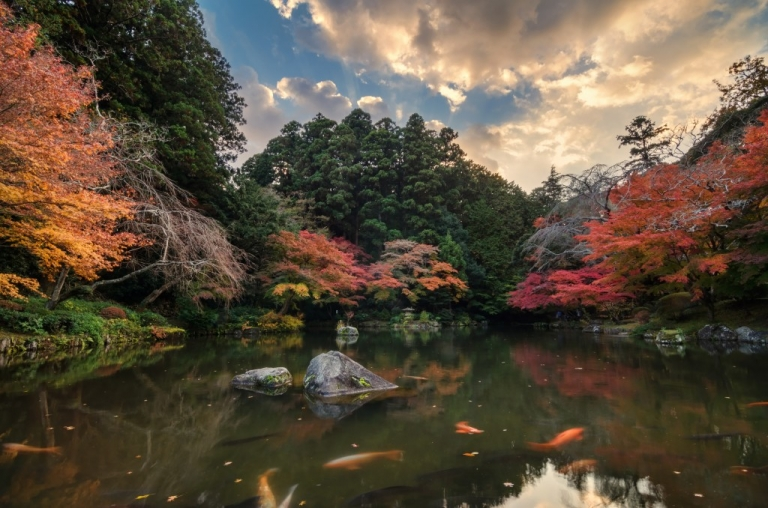 Photo of Japan in Autumn