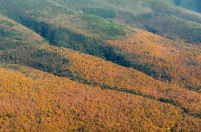 white mountains autumn colors