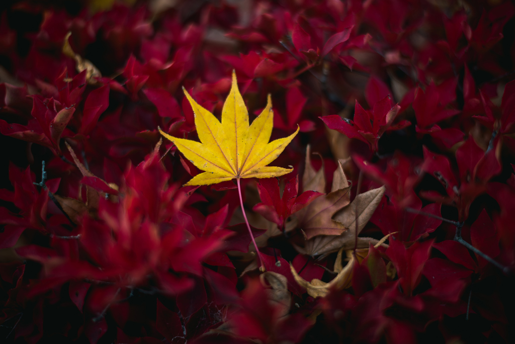 Photo of yellow autumn leaf
