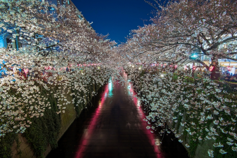 Photo of Cherry Blossoms in Tokyo Japan