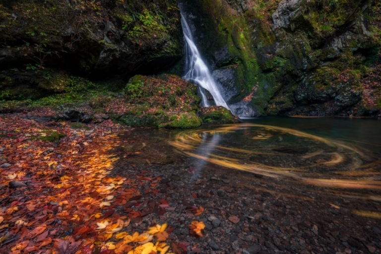 Autumn leaves swirling in water