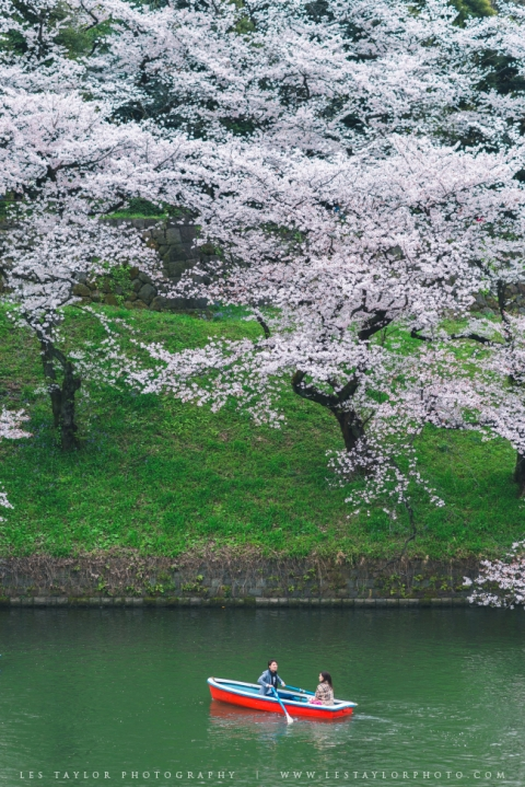 Boat and Cherry Blossoms Chidorigafuchi