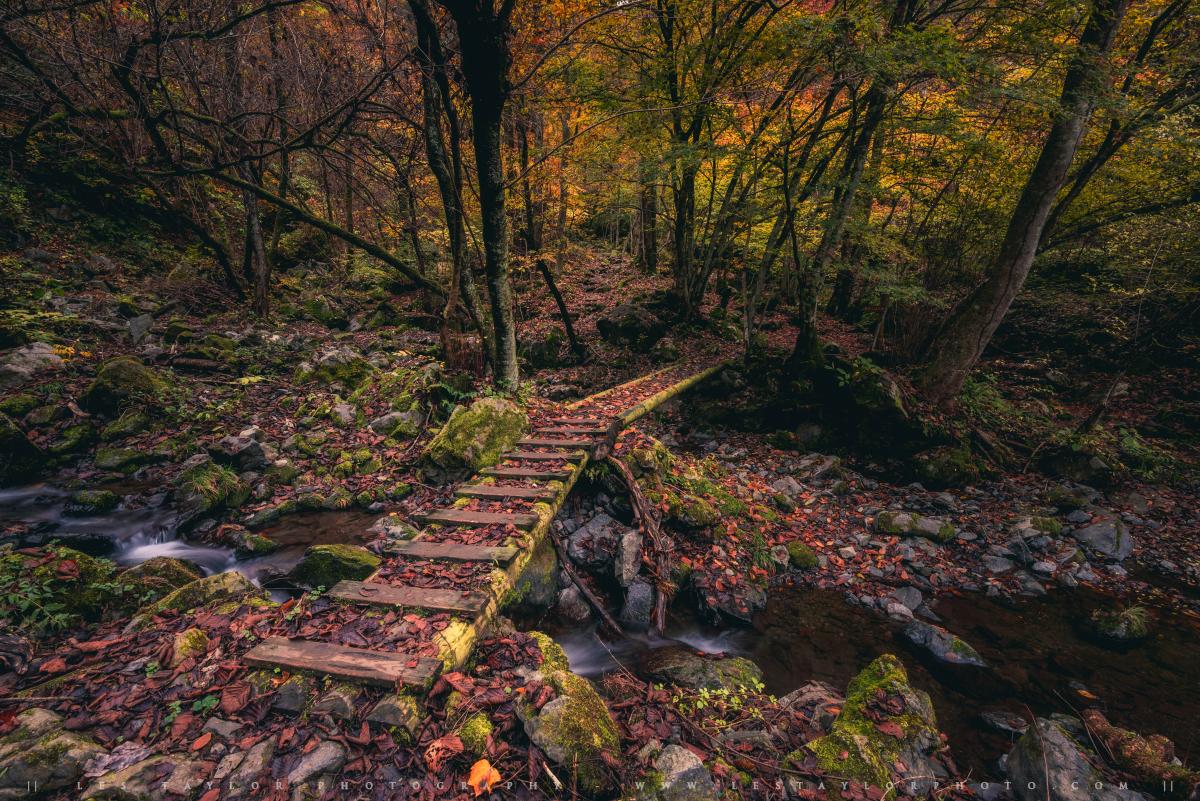 unasawa autumn final image