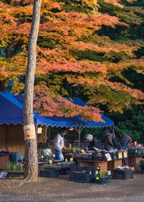 Autumn market Tokyo