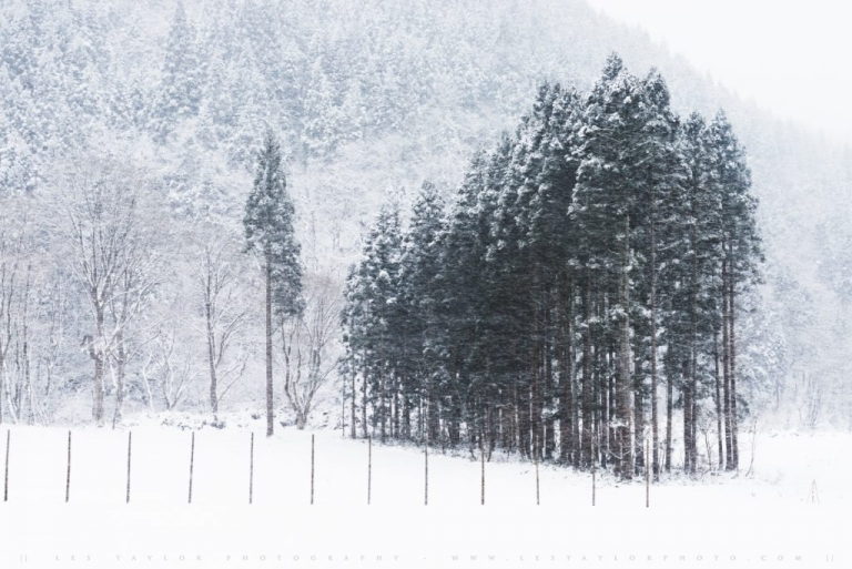 Trees in Snowy Akita